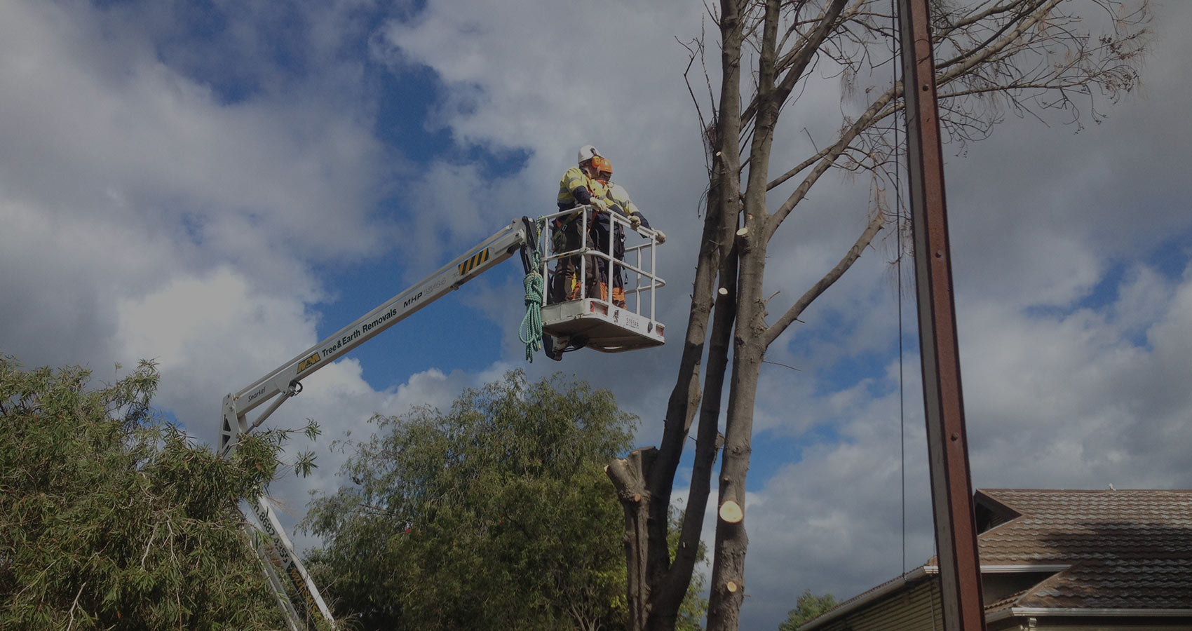 tree-main-slider-11